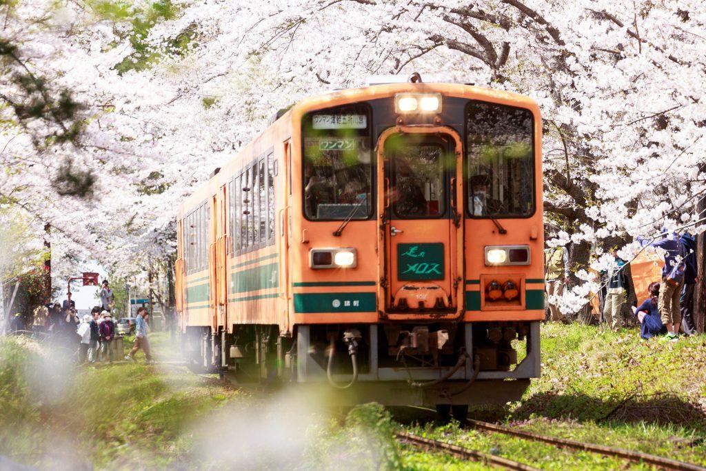 桜並木と電車