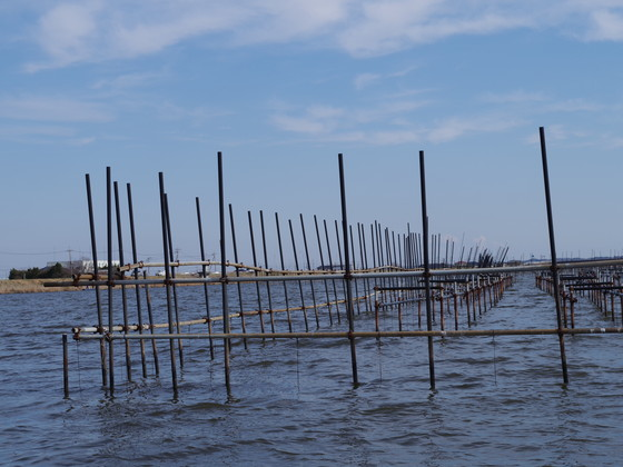 新利根川の真珠棚