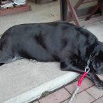 津久井湖の犬