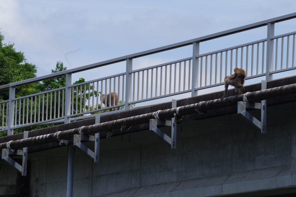おんぶ猿亀山ダム