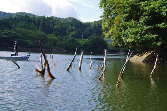 亀山ダム藤林