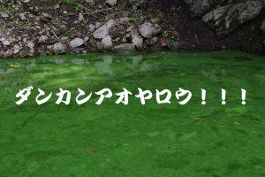アオヤロウ亀山ダム相模湖