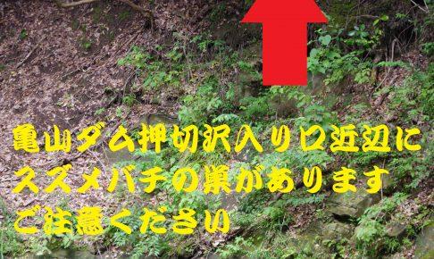 亀山ダム押切沢スズメバチ